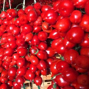 pomodorini home